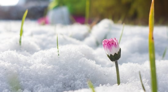 The New Spring Real Estate Market is Here. Are You Ready? | Simplifying The Market