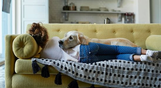 Why Pet-Friendly Homes Are in High Demand   Simplifying The Market